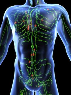 Lympathic-system